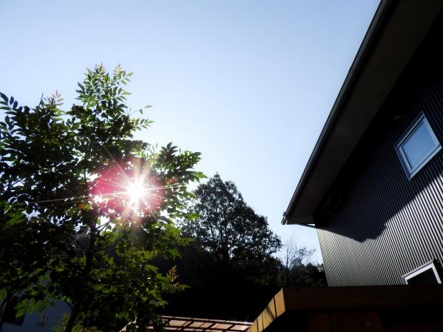 写真AC 庭に差し込む朝日