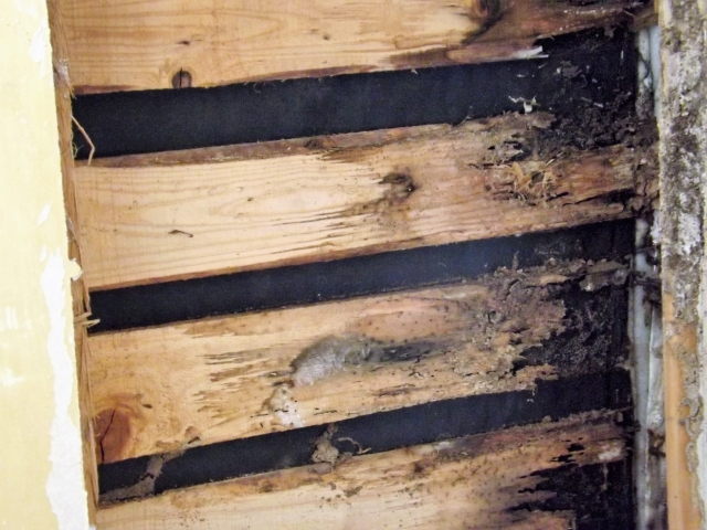 写真AC シロアリ 壁内 シロアリ消毒 リフォーム