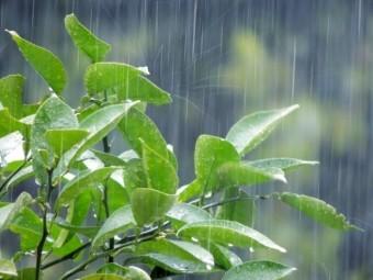 降水(photoACより)