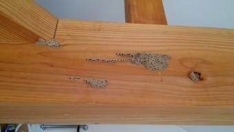写真AC 蟻土 シロアリ 防蟻処理 修繕