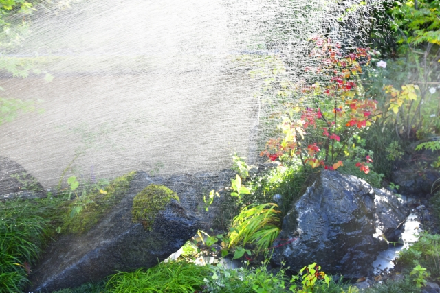 写真AC 庭木の水やり