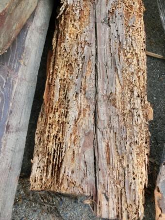 写真AC シロアリ被害の木 リフォーム