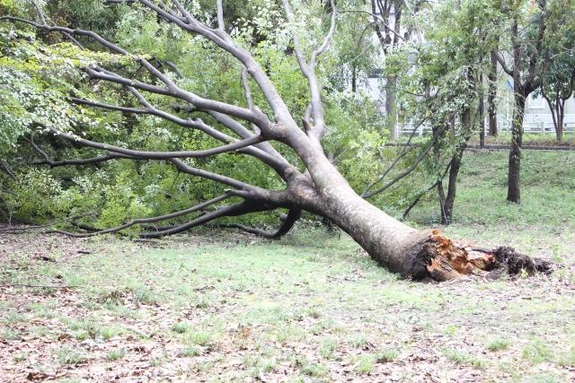 写真AC 台風の爪痕(折れた木)