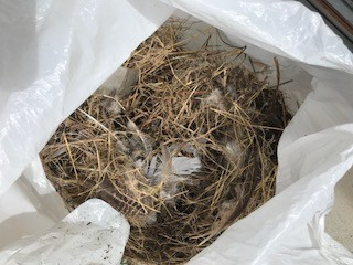 鳥の巣 撤去
