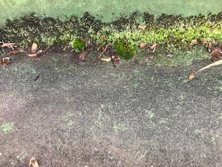 陸屋根 苔