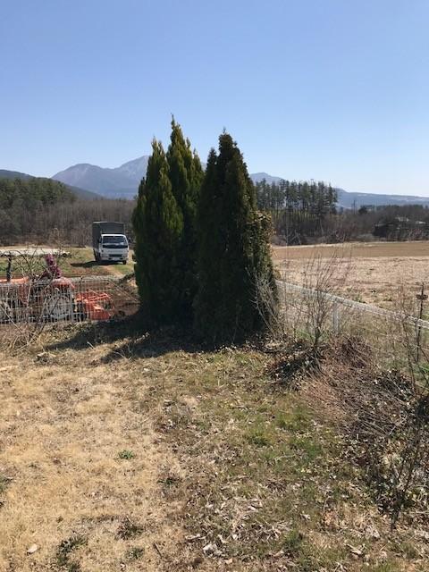 外構工事 撤去樹木