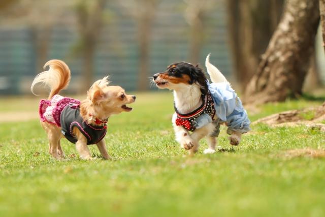 写真AC 遊ぶ犬