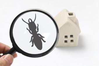 写真AC 虫眼鏡とシロアリとミニチュアの家 害虫 防蟻処理