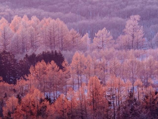写真AC 霧氷の森9